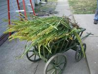goat_cart_fern.jpg