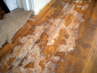 hardwood_damage.jpg